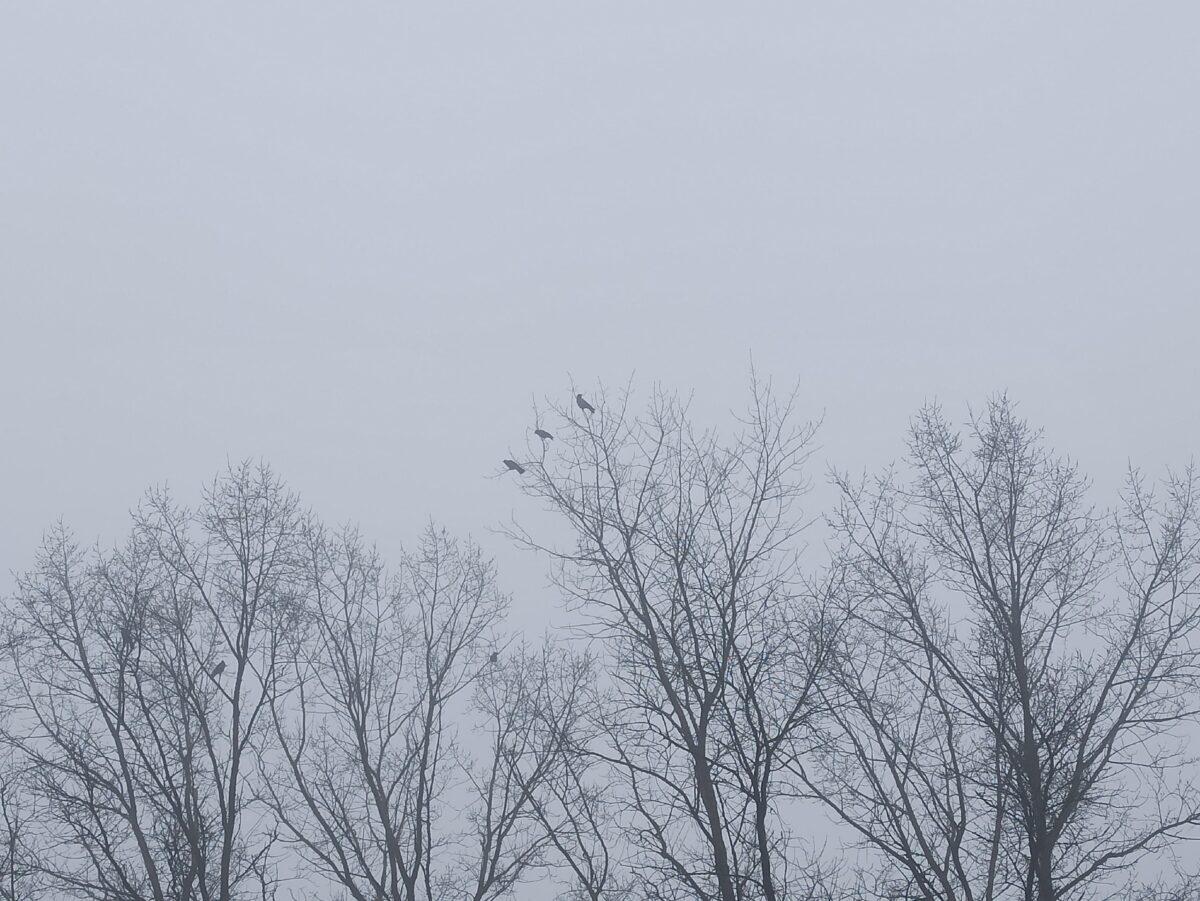 После грозы жителей Тверской области ждёт туман