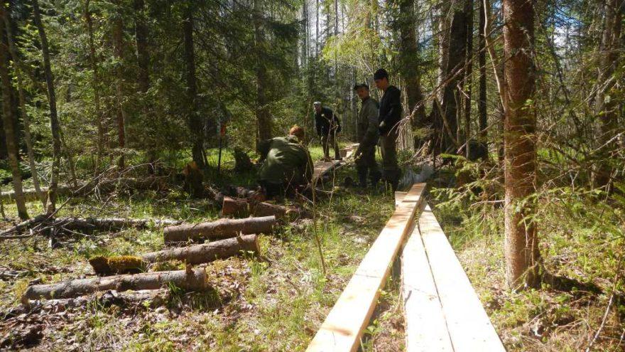 Экологи рассказали, как работает заповедник Тверской области в условиях пандемии