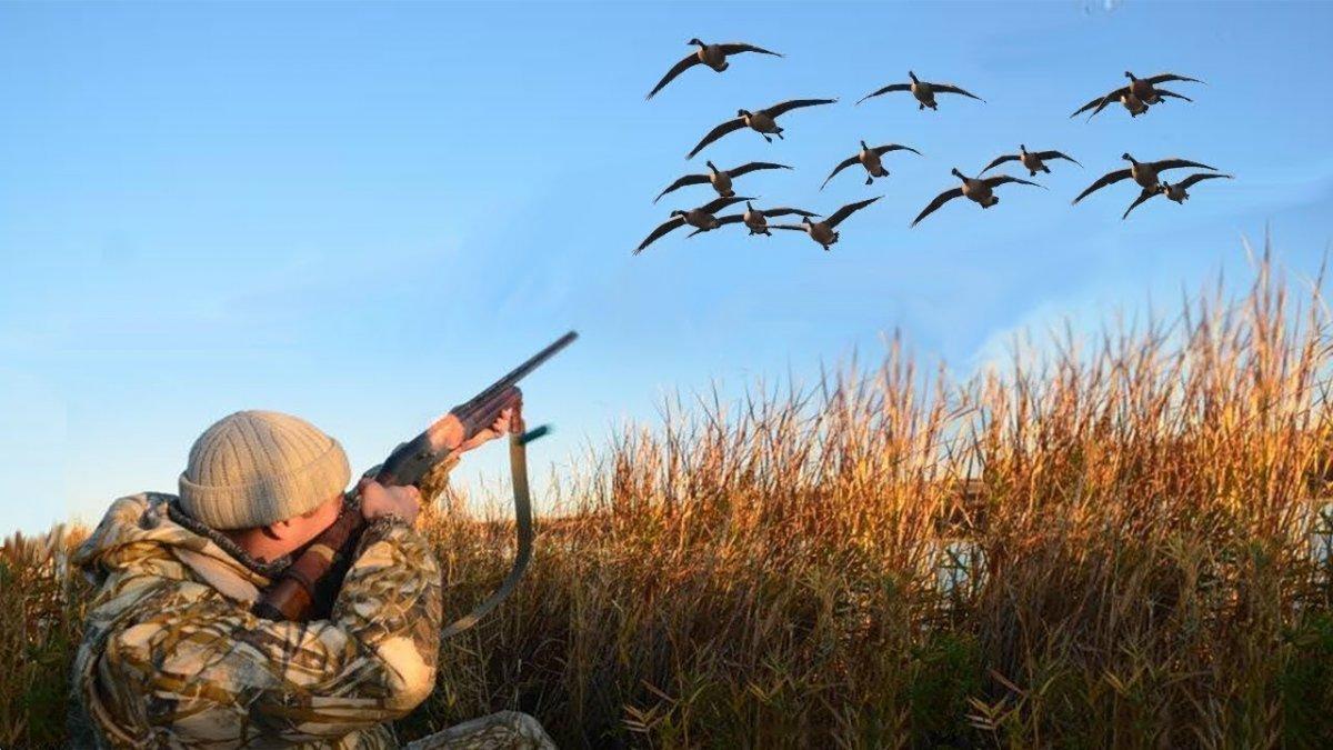 В Тверской области продлили запрет на охоту