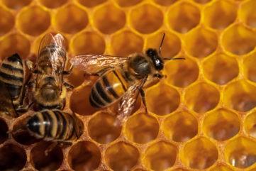 У мертвых пчел в Тверской области нашли опасное инфекционное заболевание