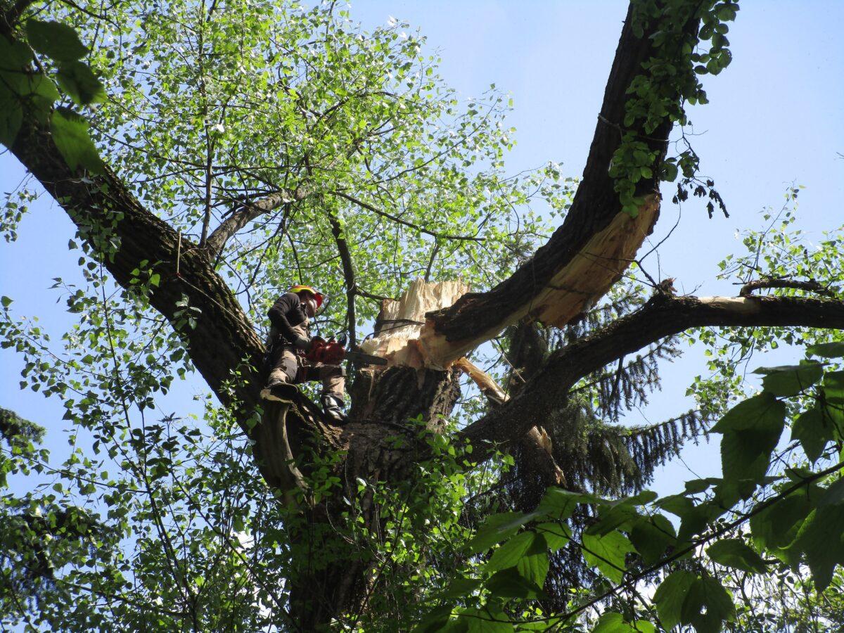 Тверским спасателям в ботаническом саду пришлось работать на огромной высоте
