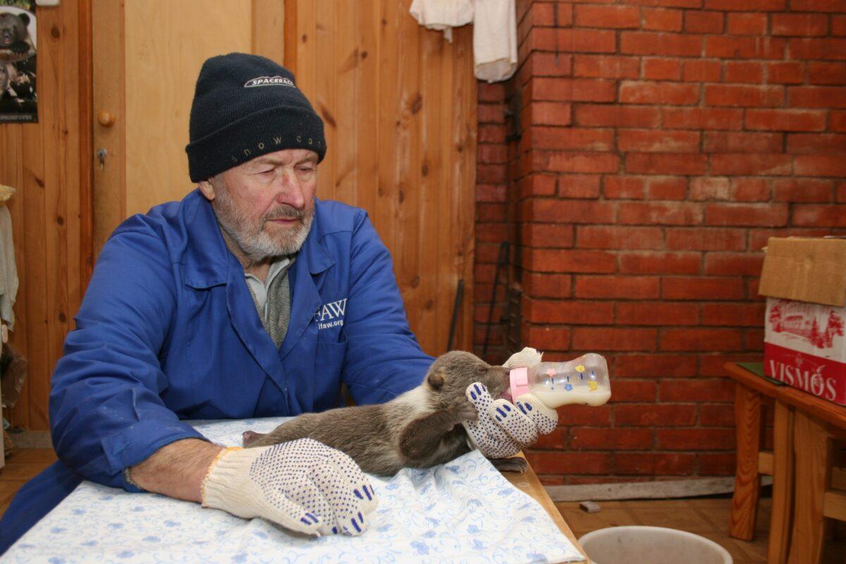 Главный медвежий папа Тверской области отметил день рождения