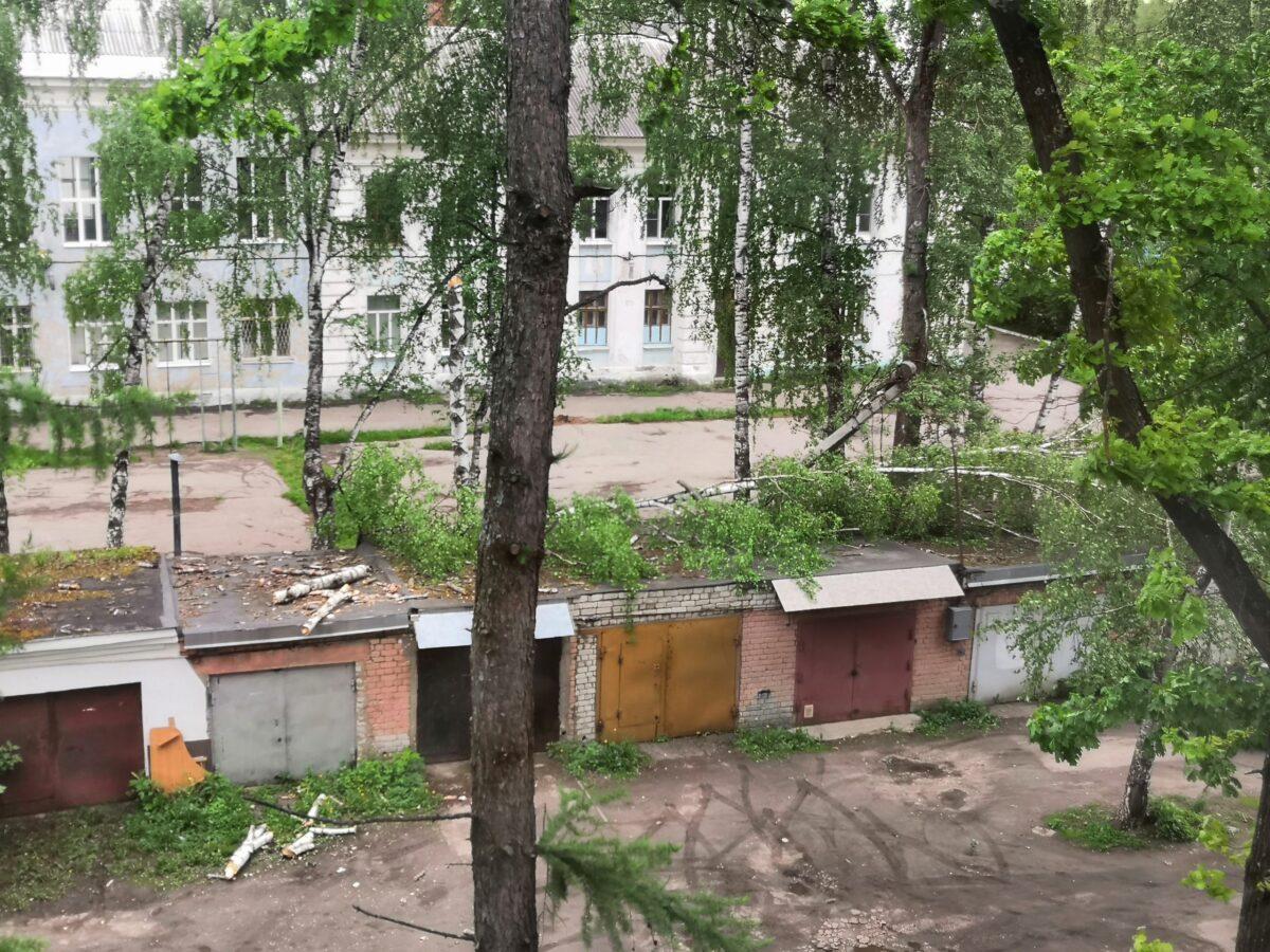 В Твери из-за сильного ветра падают большие деревья