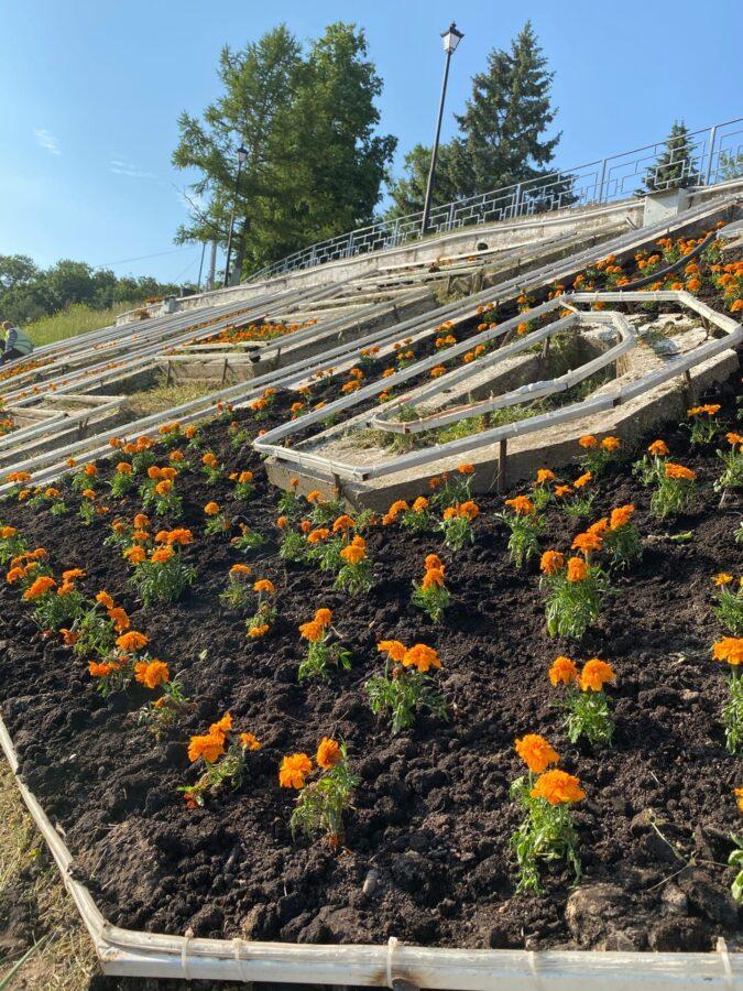 В Ржеве Тверской области неизвестные выкапывают цветы с городских клумб