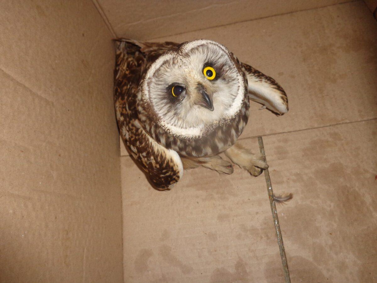 В Тверской области совы нашли новый дом