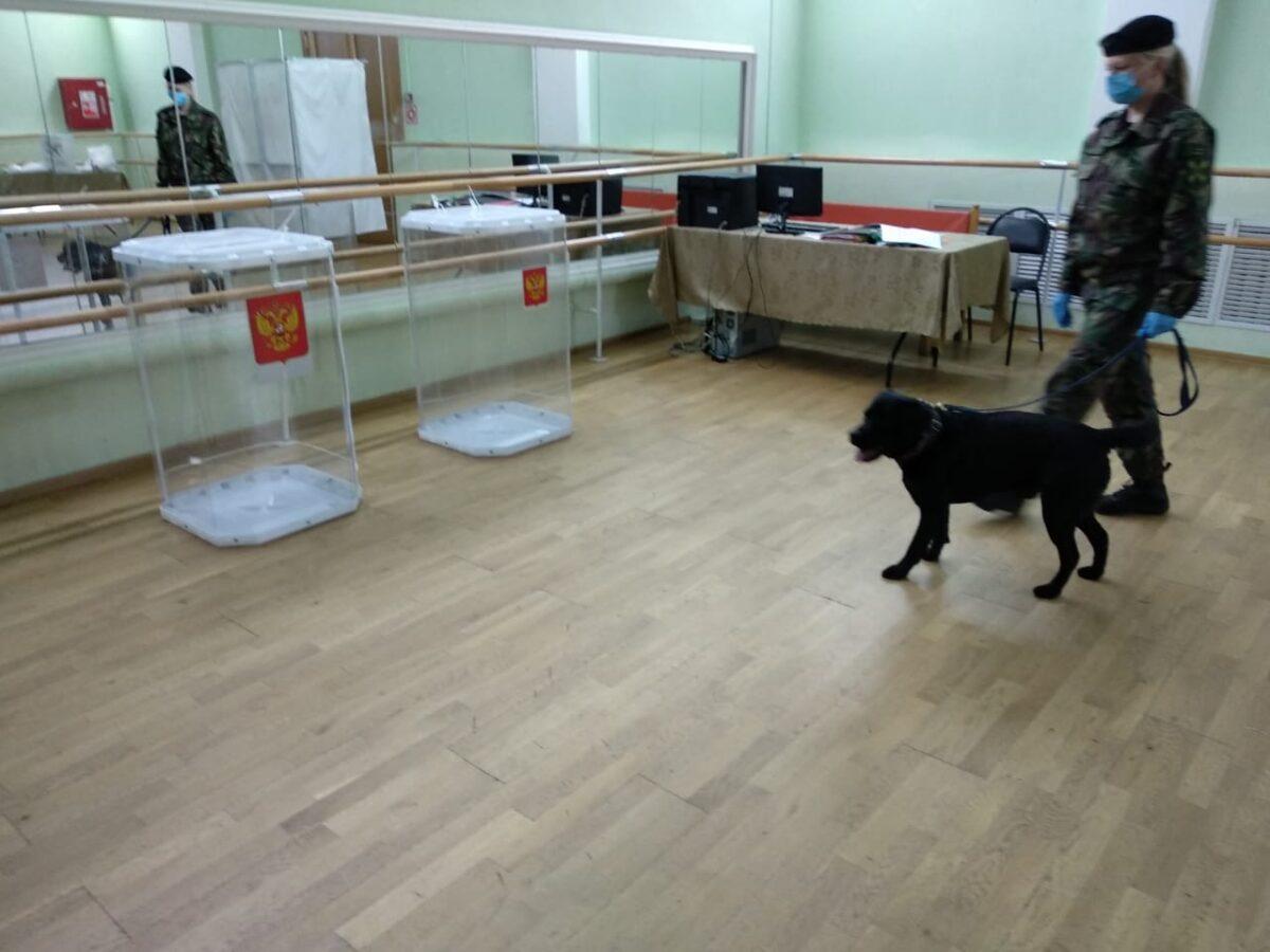 ТОП голосования: Участки для голосования в Тверской области проверили с собаками