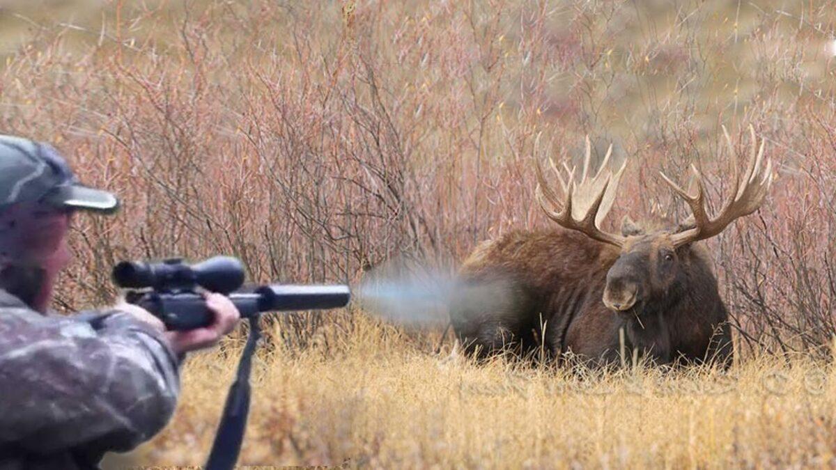 В Тверской области по горячим следам нашли охотника, застрелившего лося