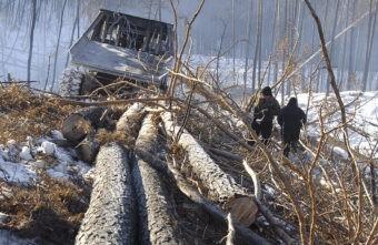 Одна незаконная рубка дорого обошлась жителям Тверской области