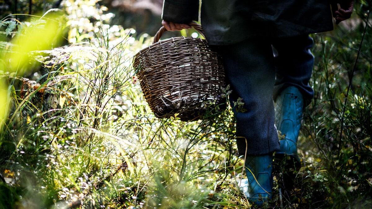 Спасатели Тверской области рассказали о мерах безопасности в лесу