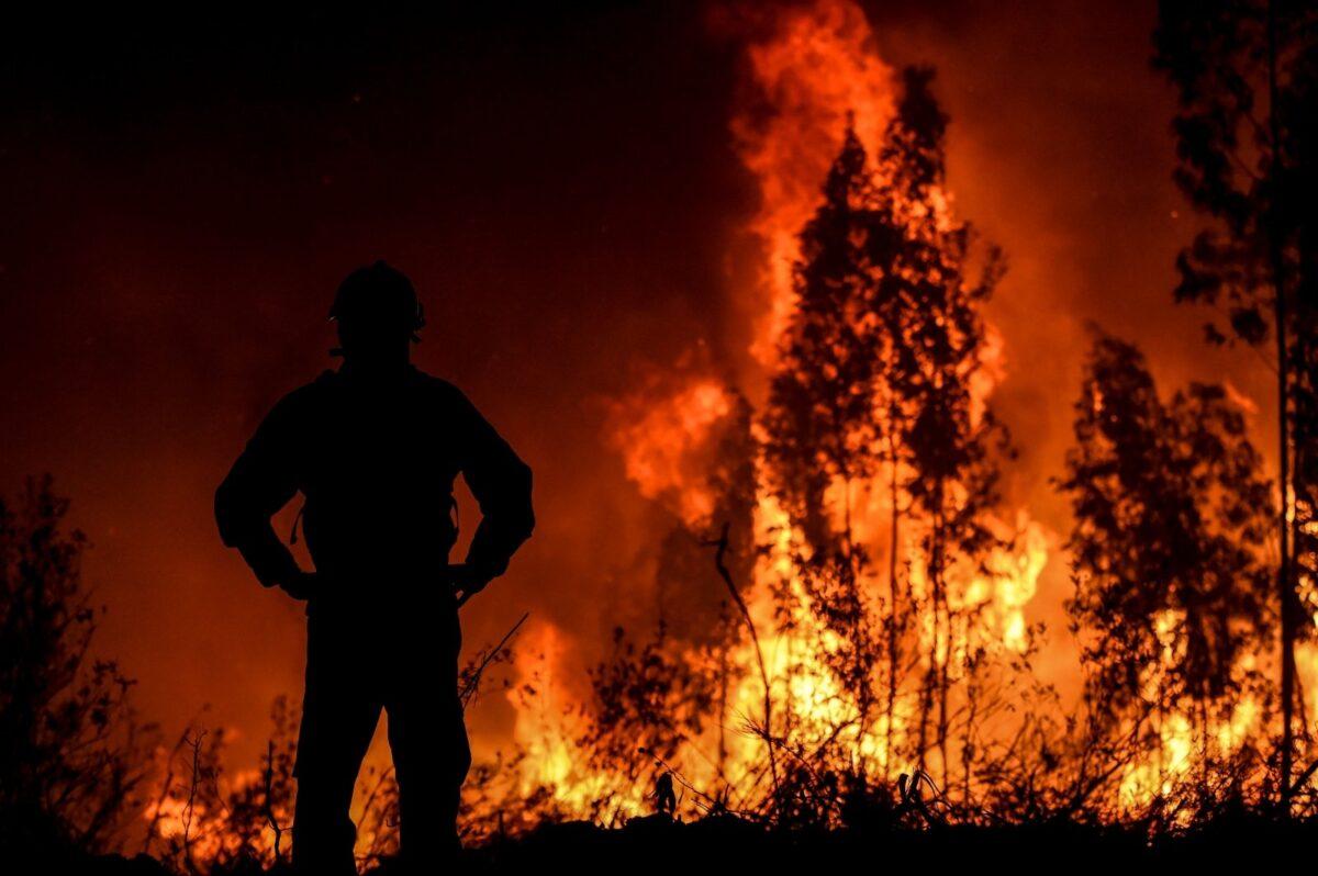 Больше леса - меньше пожаров: в Тверской области увеличат Гослесфонд