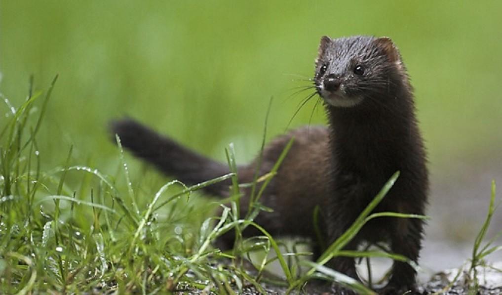 Редкие виды растений и животных инвентаризируют в Тверской области