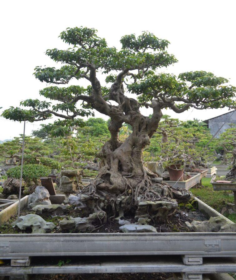 В Твери хотят создать вьетнамский сад
