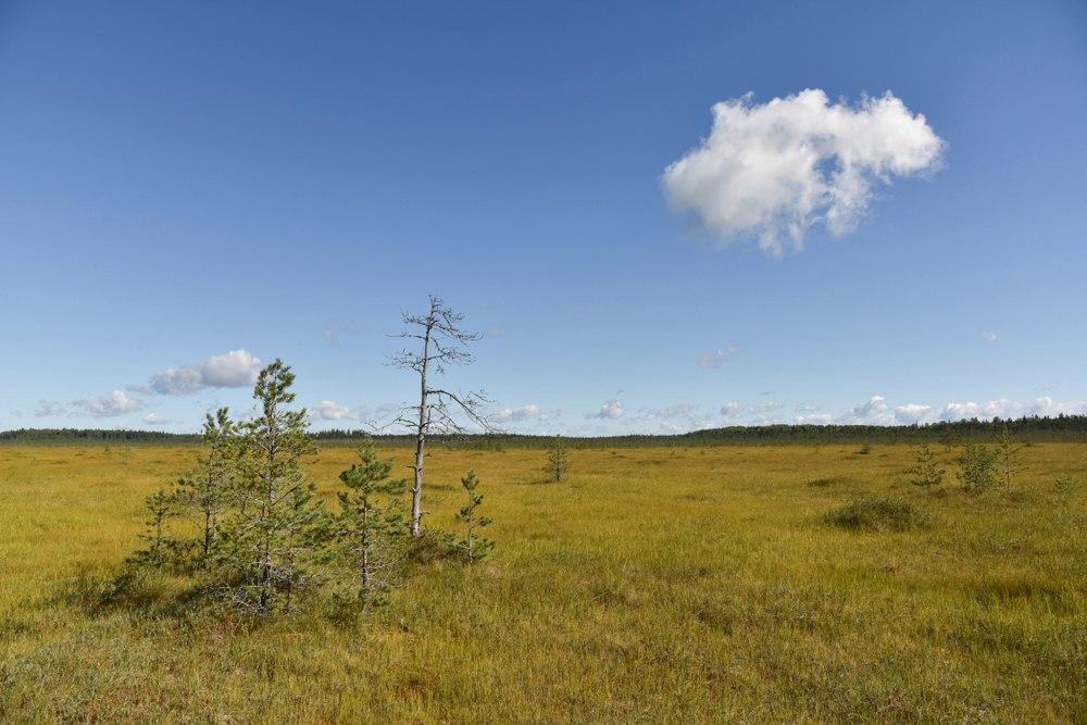 Гостей Тверской области зовут в болото