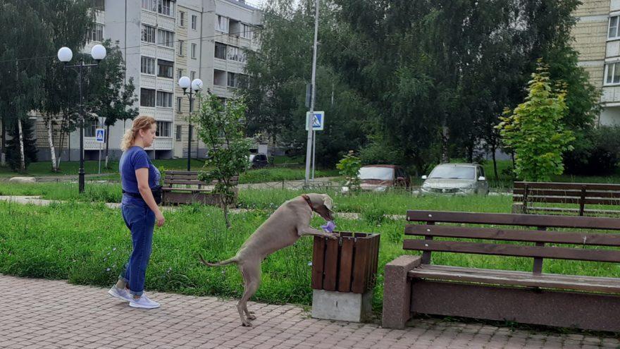 В Твери дворником работает собака Берта