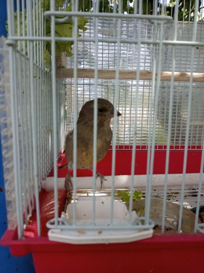 Как лесной птице живется в тверской квартире