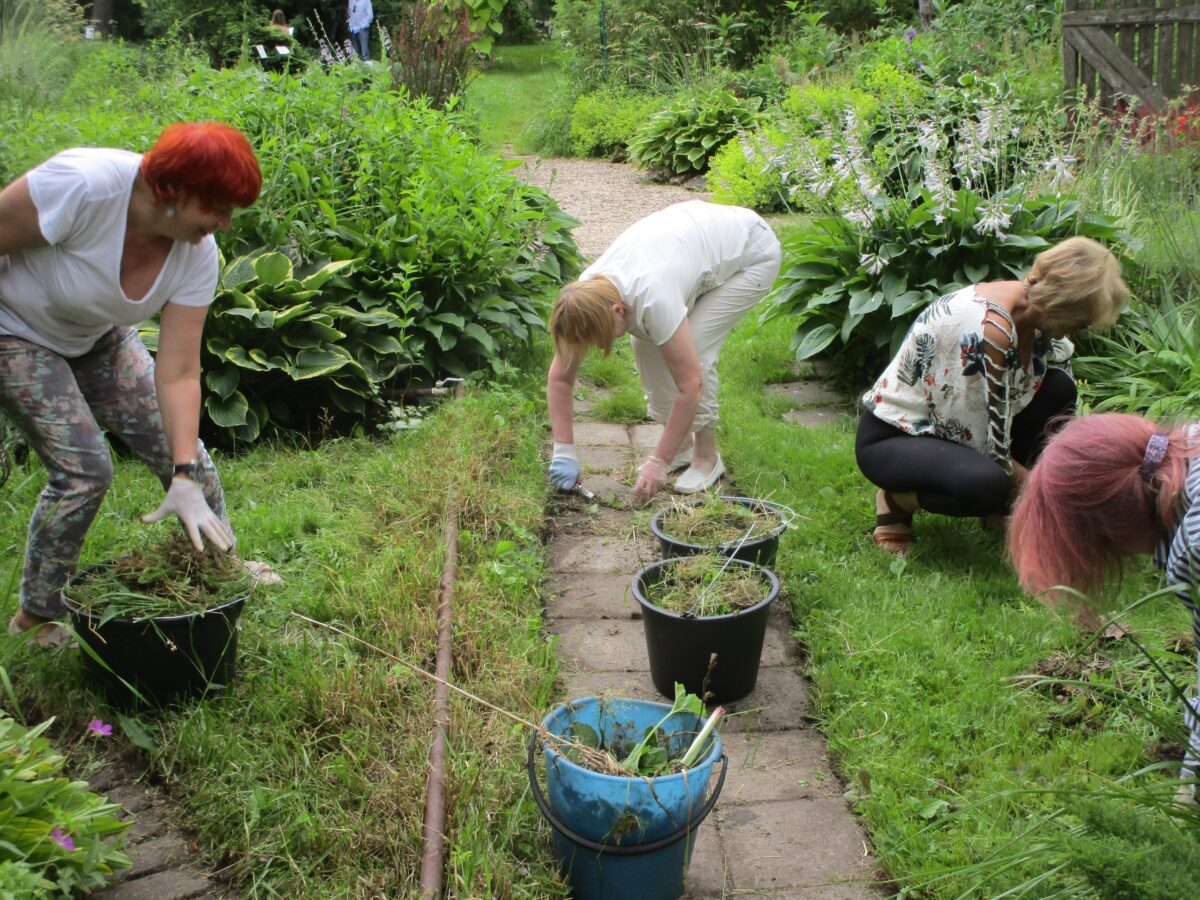 Тверскому Ботаническому саду нужна помощь волонтеров