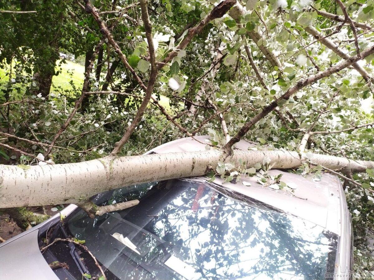 Власть возместит ущерб за машину, на которую упало дерево в Тверской области