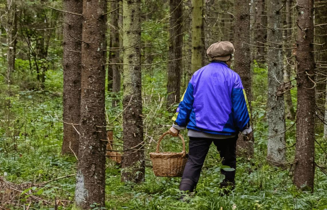У поисковика в Тверской области тёща заблудилась в лесу