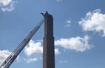 Спасатели в Тверской области помогли аисту выбраться из западни