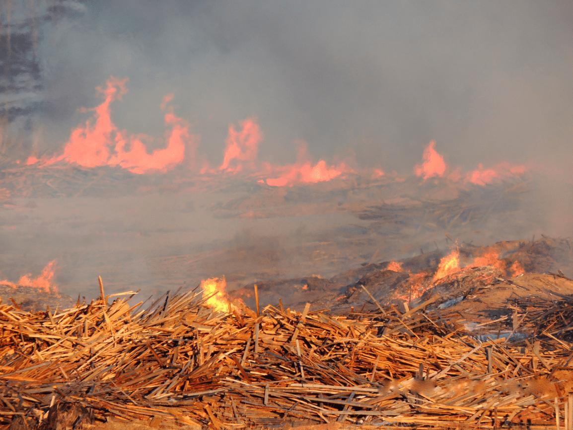 На пилораме в Твери незаконно сжигали отходы