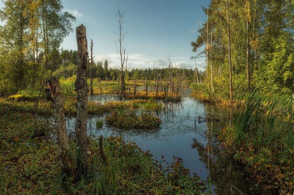 Болота, парки, муравейники: в Тверской области будут охранять ещё 4 природные территории