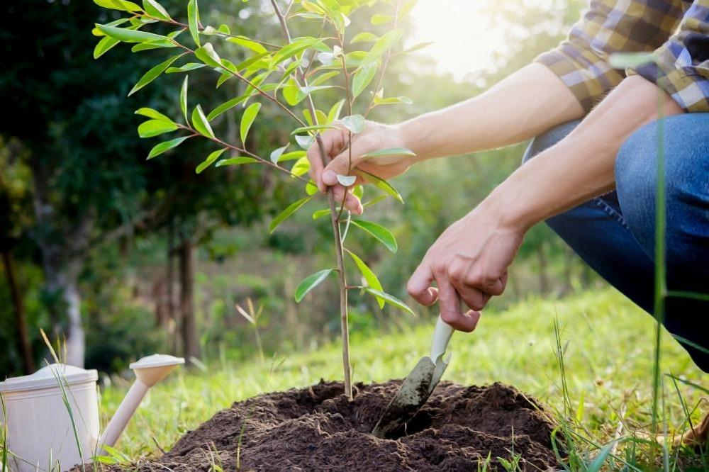 6 миллионов деревьев посадили в Тверской области