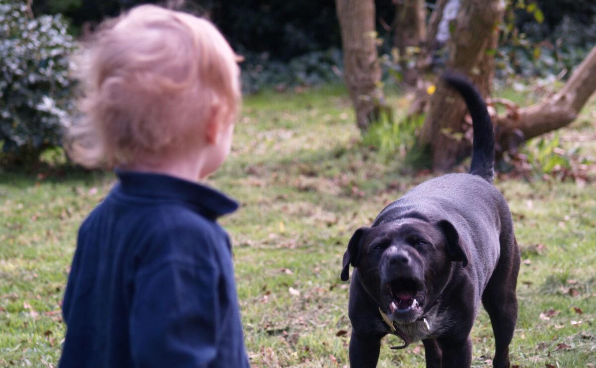 В Тверской области бродячая собака напала на 3-летнего ребенка