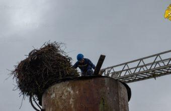 Сотрудники МЧС спасли семью аистов в Тверской области