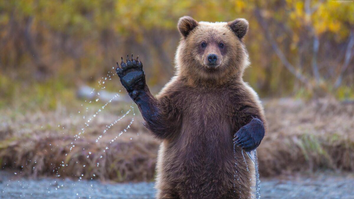 В Тверской области откроют охоту на кабана, медведя и дичь