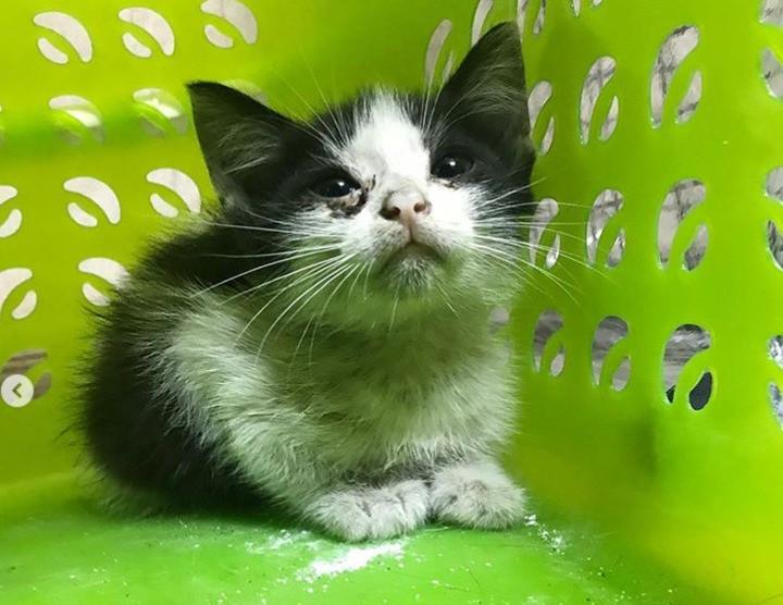 Бездомный котенок проехал от Твери до Медного под капотом машины