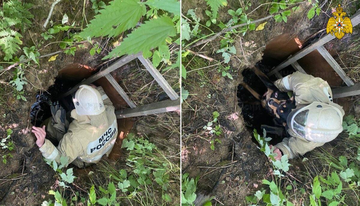 В Тверской области спасатели достали собаку со дна колодца