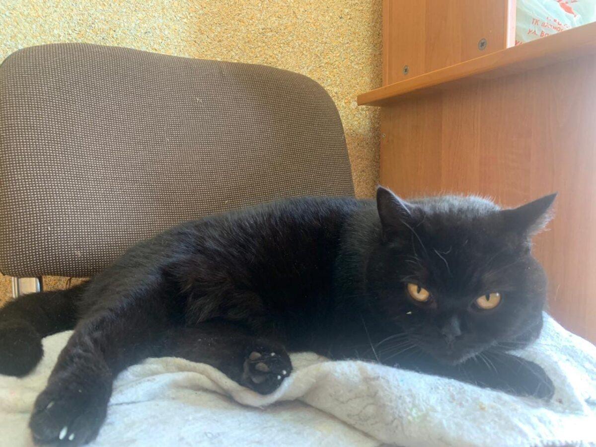 Пропавшего циркового кота Марселя спустя месяц нашли в Твери