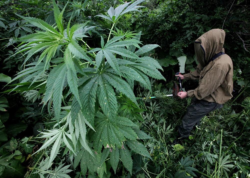 Жителю Тверской области, хранившему дома наркотики, приговор не смягчили