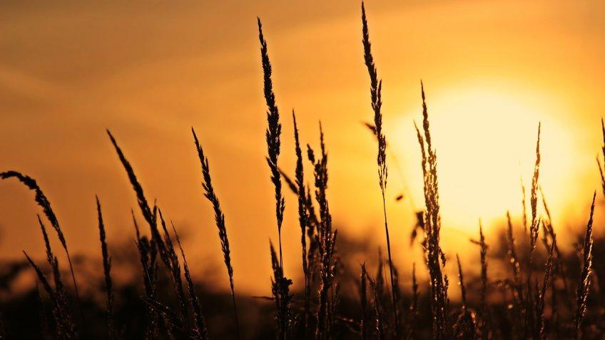 На выходные в Тверскую область вернется жара