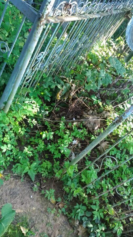На кладбище в Тверской области с могил воруют ограды