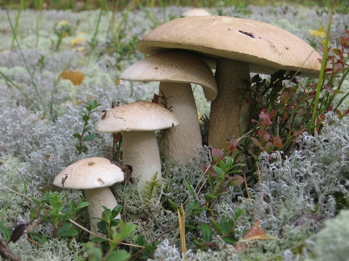 Без зависти не взглянешь: топ-10 грибных фото в Тверской области
