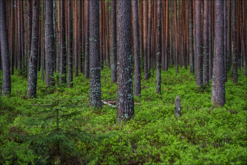 В лесном фонде Тверской области станет на 2300 гектаров земли больше