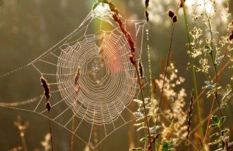 Мухи и листья наизнанку: топ-10 народных примет осени
