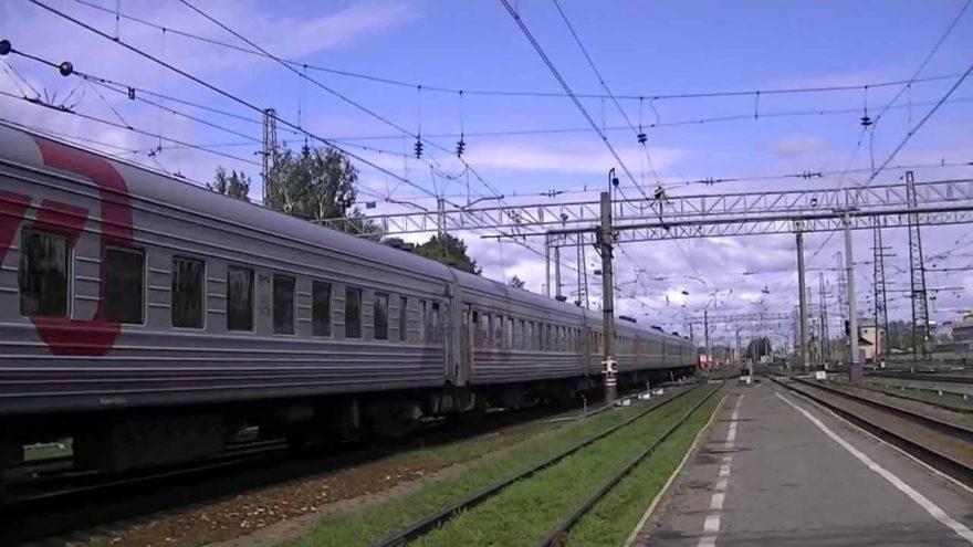 В Тверской области поезд сбил двух кабанов