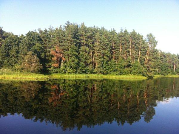 В Тверской области работников леса поздравили с профессиональным праздником