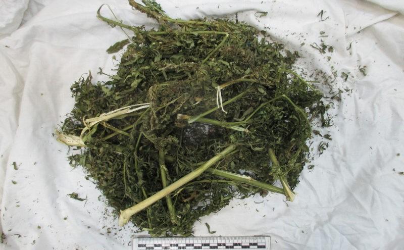 Жительница деревни под Тверью хранила марихуану на чердаке сарая