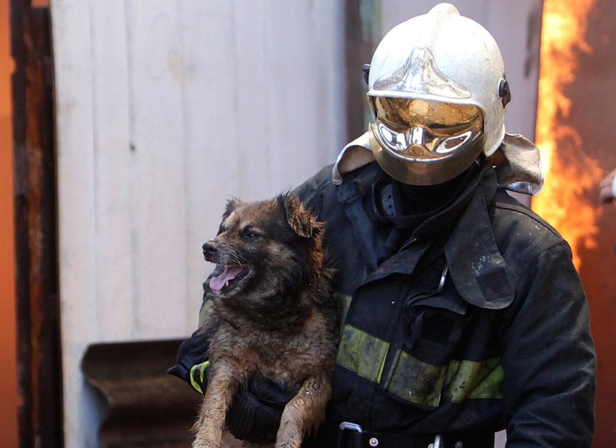 Спасатели из горящей пятиэтажки в Тверской области вынесли собаку