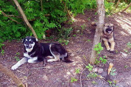 В Твери собаки помогли очистить старинное кладбище от наркоманов