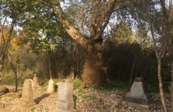 В Твери энтузиасты нашли и отреставрировали десятки старинных могил