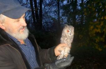 Еще две совы из Тверской области отправились в свободный полет