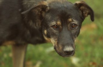 Живодёр подстрелил собаку и протащил её на верёвке в Тверской области