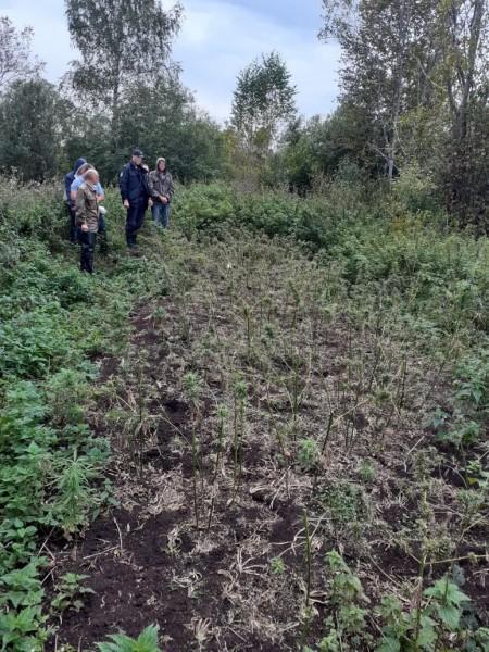 Житель Тверской области засеял поле коноплёй