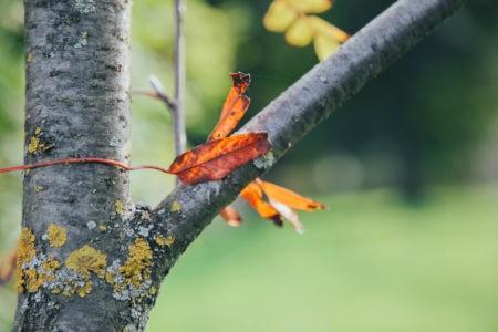 Прогноз на неделю: тепло еще может вернуться в Тверскую область