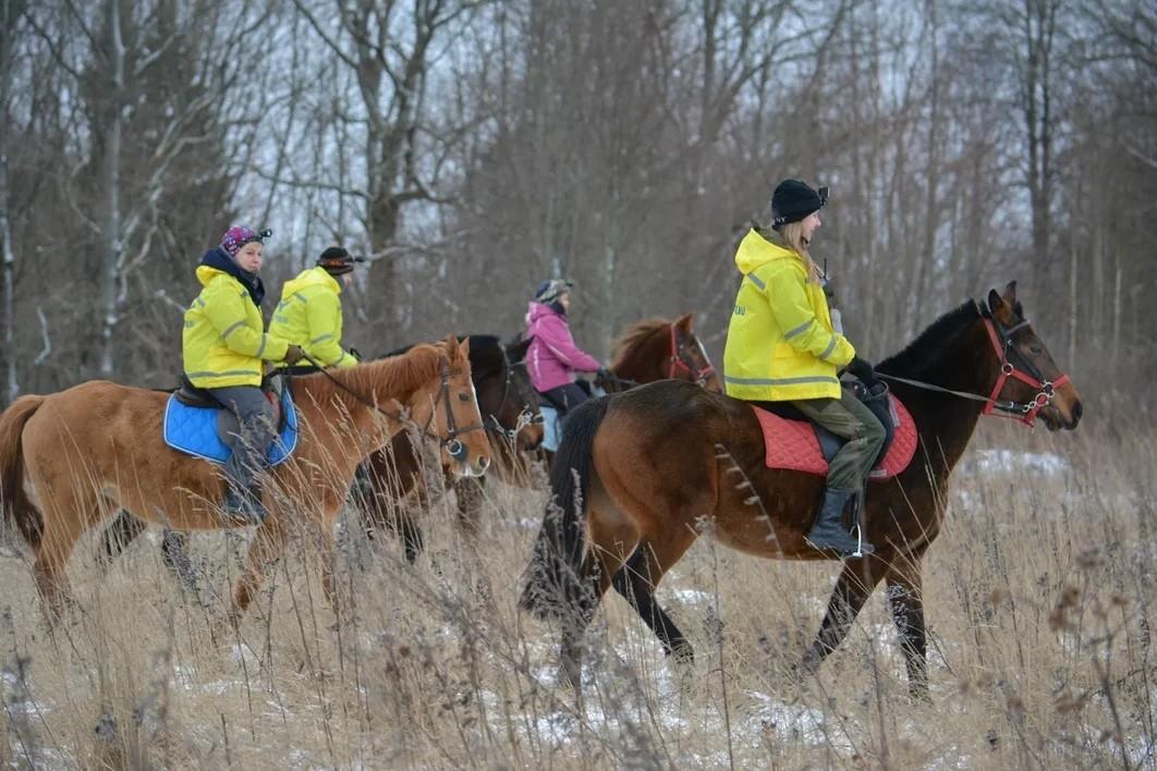 Тверским спасателям нужны волонтеры на лошадях