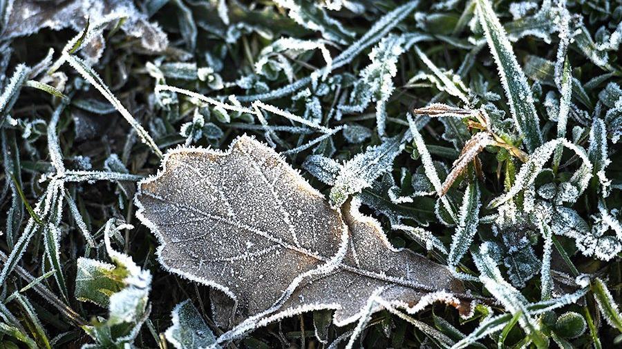 Тверские синоптики рассказали о силе морозов на предстоящих выходных